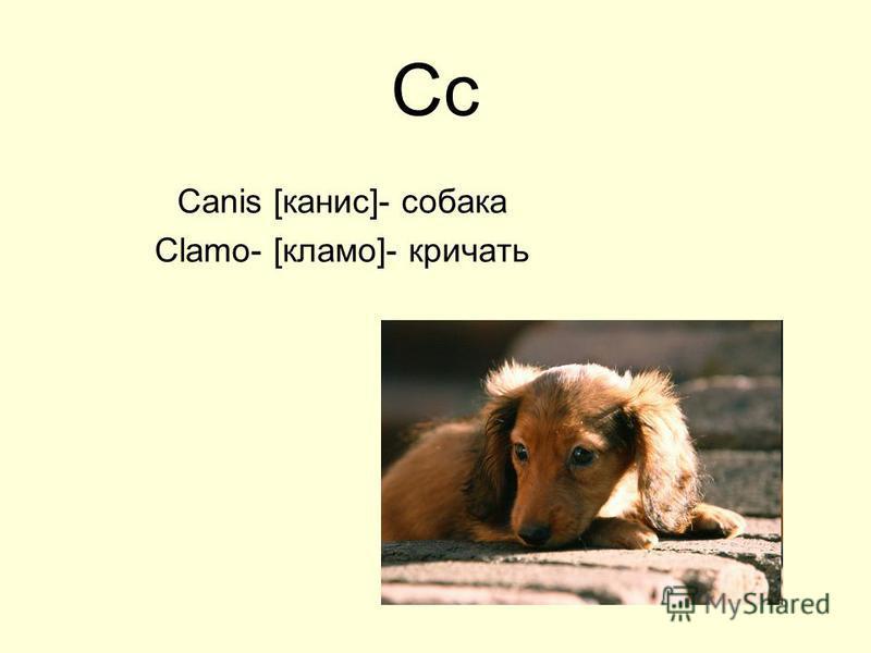 Cc Canis [канис]- собака Clamo- [кламо]- кричать