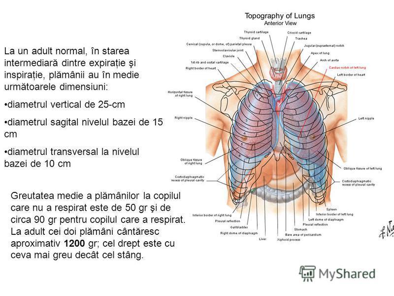 La un adult normal, în starea intermediară dintre expiraţie şi inspiraţie, plămânii au în medie următoarele dimensiuni: diametrul vertical de 25-cm diametrul sagital nivelul bazei de 15 cm diametrul transversal la nivelul bazei de 10 cm Greutatea med