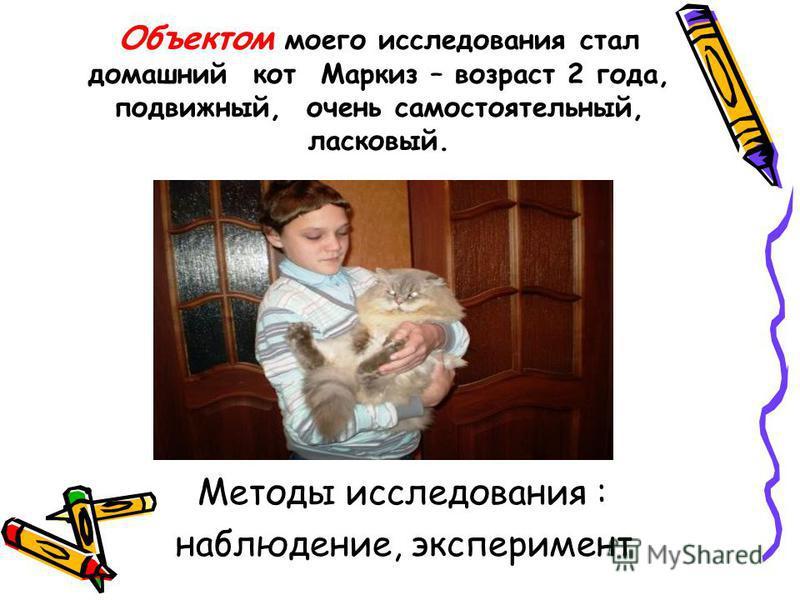Объектом моего исследования стал домашний кот Маркиз – возраст 2 года, подвижный, очень самостоятельный, ласковый. Методы исследования : наблюдение, эксперимент