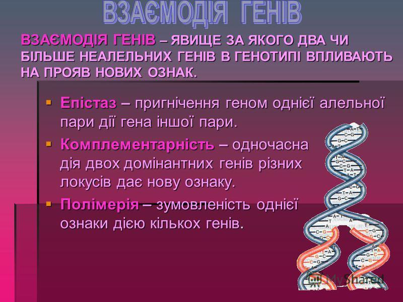 1. 1.ВЗАЄМОДІЯ ГЕНІВ 2. 2.МНОЖИННА ДІЯ ГЕНА 3. 3.ГЕНОТИП ЯК ЦІЛІСНА СИСТЕМА РОГАТИНСЬКИЙ ДЕРЖАВНИЙ АГРАРНИЙ КОЛЕДЖ © 2013