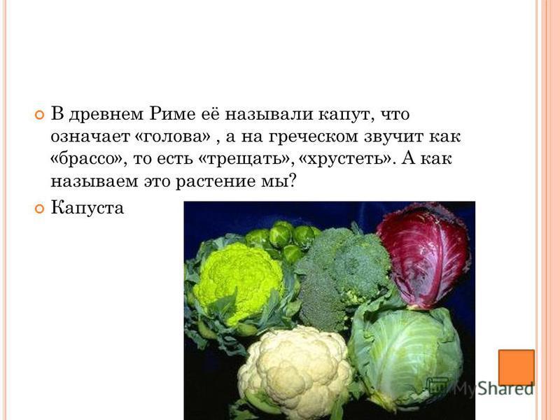 В древнем Риме её называли капут, что означает «голова», а на греческом звучит как «брасса», то есть «трещать», «хрустеть». А как называем это растение мы? Капуста