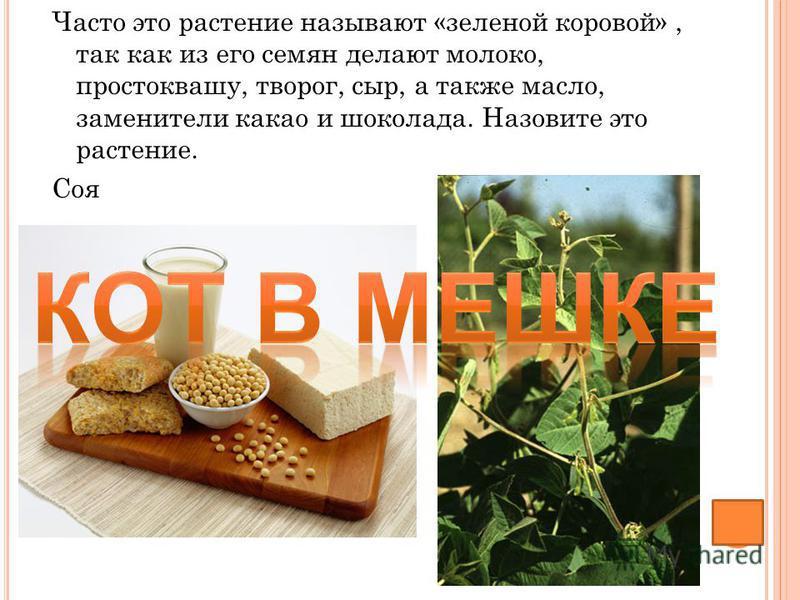 Часто это растение называют «зеленой коровой», так как из его семян делают молоко, простоквашу, творог, сыр, а также масло, заменители какао и шоколада. Назовите это растение. Соя
