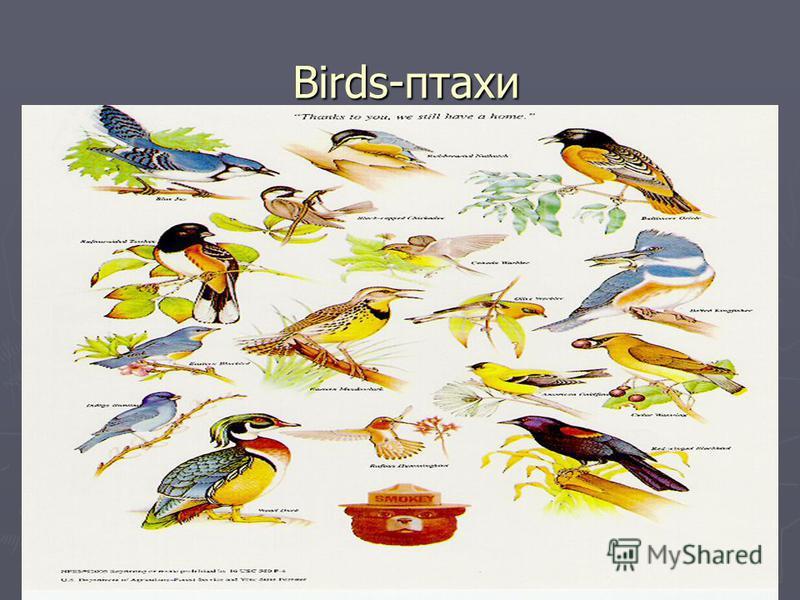 Birds-птахи