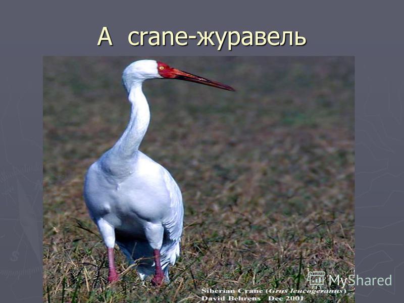 A crane-журавель