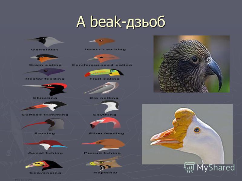 A beak-дзьоб