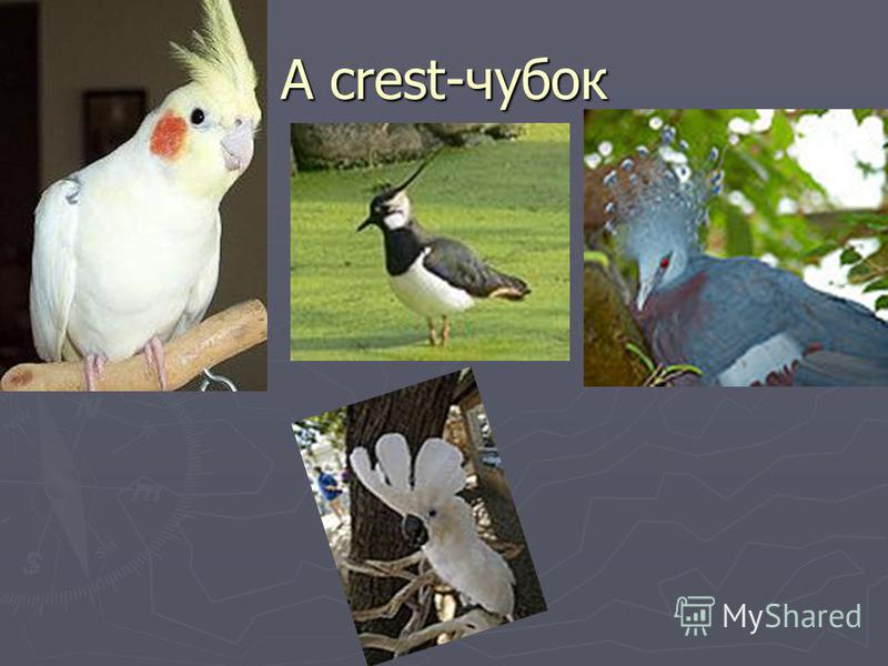 A crest-чубок