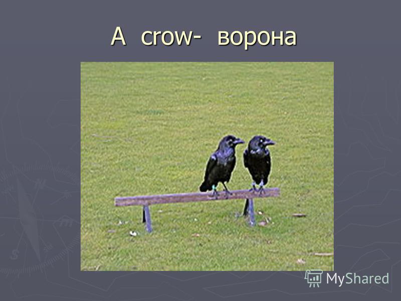 A crow- ворона A crow- ворона