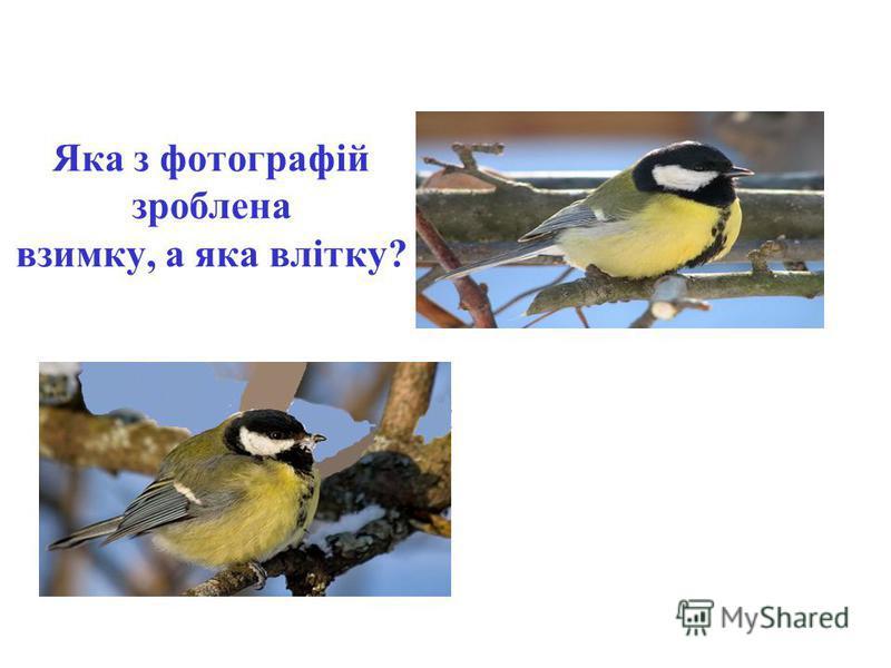 Яка з фотографій зроблена взимку, а яка влітку?