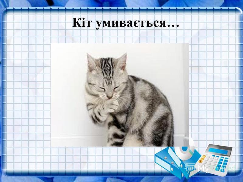Кіт умивається…