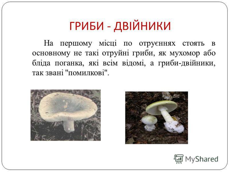 ГРИБИ - ДВІЙНИКИ На першому місці по отруєннях стоять в основному не такі отруйні гриби, як мухомор або бліда поганка, які всім відомі, а гриби-двійники, так звані помилкові.
