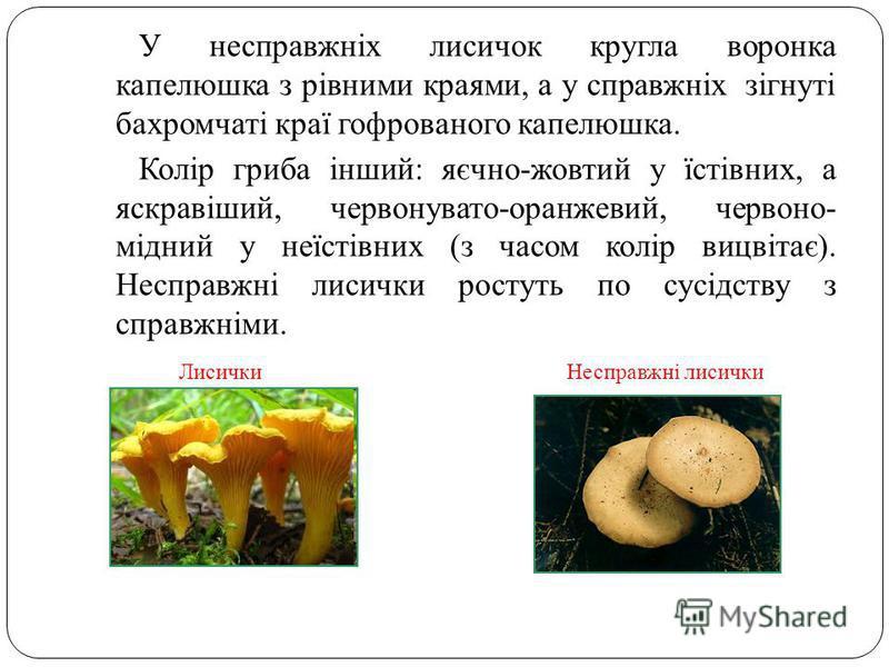 У несправжніх лисичок кругла воронка капелюшка з рівними краями, а у справжніх зігнуті бахромчаті краї гофрованого капелюшка. Колір гриба інший: яєчно-жовтий у їстівних, а яскравіший, червонувато-оранжевий, червоно- мідний у неїстівних (з часом колір