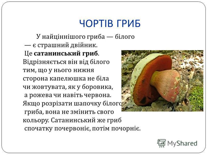ЧОРТІВ ГРИБ У найціннішого гриба білого є страшний двійник. Це сатанинський гриб. Відрізняється він від білого тим, що у нього нижня сторона капелюшка не біла чи жовтувата, як у боровика, а рожева чи навіть червона. Якщо розрізати шапочку білого гриб