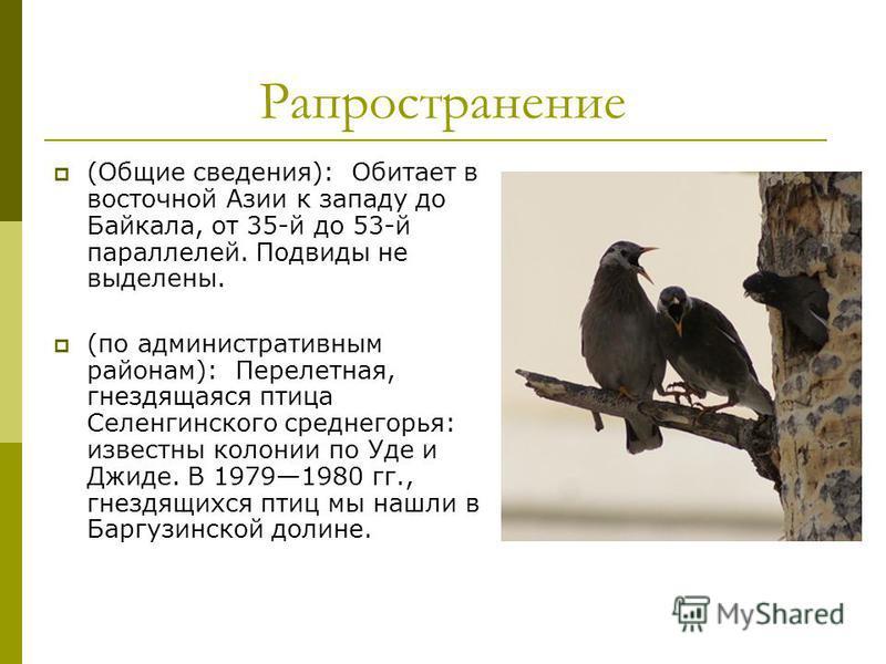 Рапространение (Общие сведения): Обитает в восточной Азии к западу до Байкала, от 35-й до 53-й параллелей. Подвиды не выделены. (по административным районам): Перелетная, гнездящаяся птица Селенгинского среднегорья: известны колонии по Уде и Джиде. В