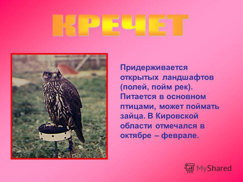 Придерживается открытых ландшафтов (полей, пойм рек). Питается в основном птицами, может поймать зайца. В Кировской области отмечался в октябре – феврале.