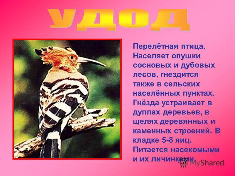 Перелётная птица. Населяет опушки сосновых и дубовых лесов, гнездится также в сельских населённых пунктах. Гнёзда устраивает в дуплах деревьев, в щелях деревянных и каменных строений. В кладке 5-8 яиц. Питается насекомыми и их личинками.