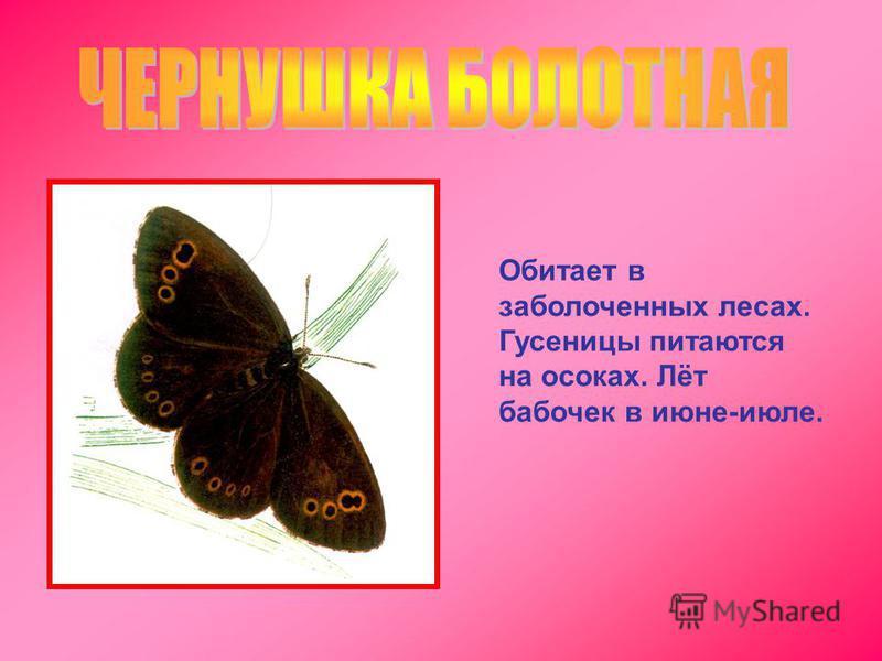 Обитает в заболоченных лесах. Гусеницы питаются на осоках. Лёт бабочек в июне-июле.
