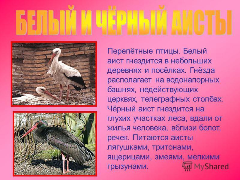 Перелётные птицы. Белый аист гнездится в небольших деревнях и посёлках. Гнёзда располагает на водонапорных башнях, недействующих церквях, телеграфных столбах. Чёрный аист гнездится на глухих участках леса, вдали от жилья человека, вблизи болот, речек