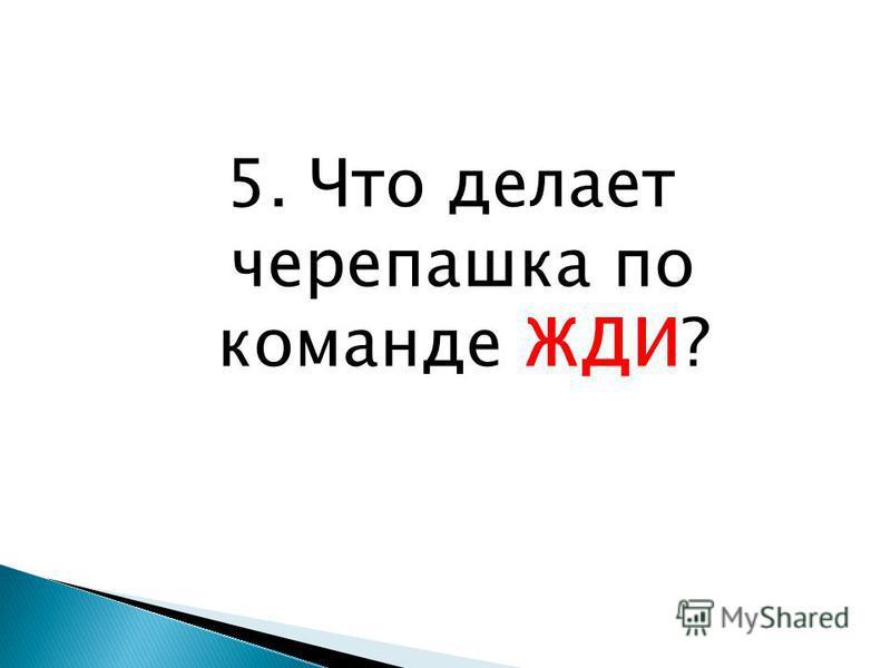 5. Что делает черепашка по команде ЖДИ?