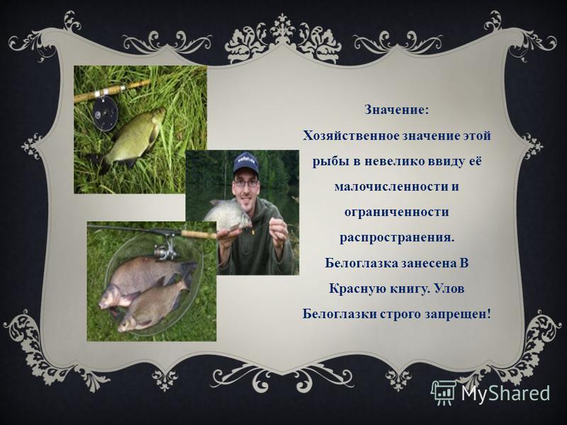 Значение: Хозяйственное значение этой рыбы в невелико ввиду её малочисленности и ограниченности распространения. Белоглазка занесена В Красную книгу. Улов Белоглазки строго запрещен!