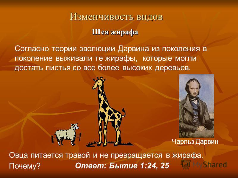 Изменчивость видов Шея жирафа Согласно теории эволюции Дарвина из поколения в поколение выживали те жирафы, которые могли достать листья со все более высоких деревьев. Овца питается травой и не превращается в жирафа. Почему? Ответ: Бытие 1:24, 25 Чар