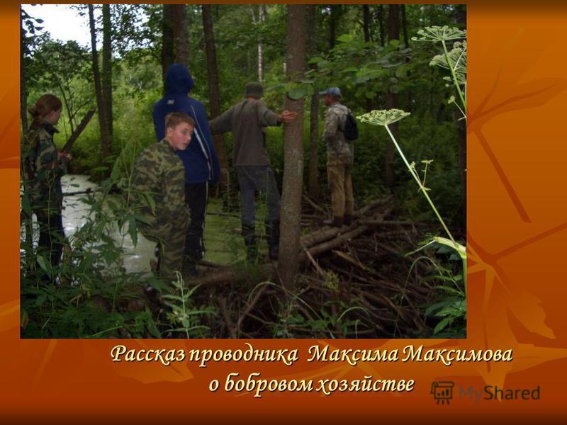 Рассказ проводника Максима Максимова о бобровом хозяйстве