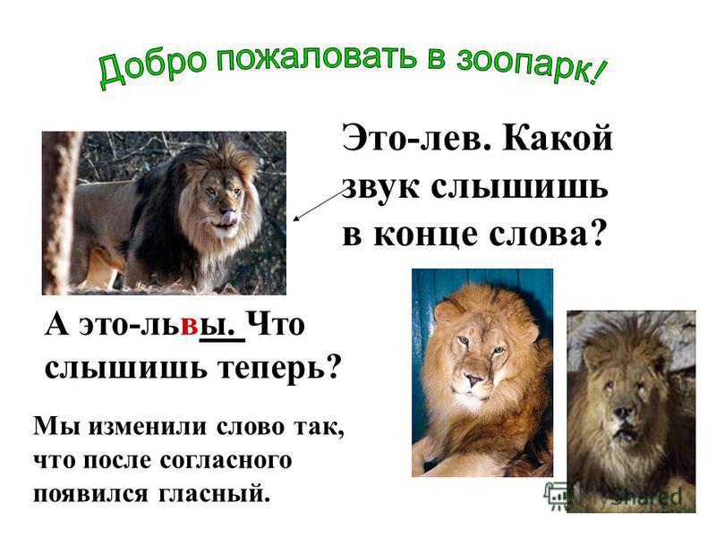 Это-лев. Какой зфук слышишь в конце слова? А это-львы. Что слышишь теперь? Мы изменили слово так, что после согласного появился гласный.
