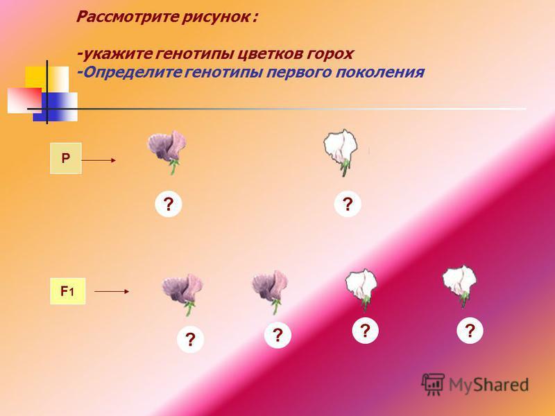 Рассмотрите рисунок : -укажите генотипы цветков горох -Определите генотипы первого поколения P F1F1 ? ? ? ? ? ?