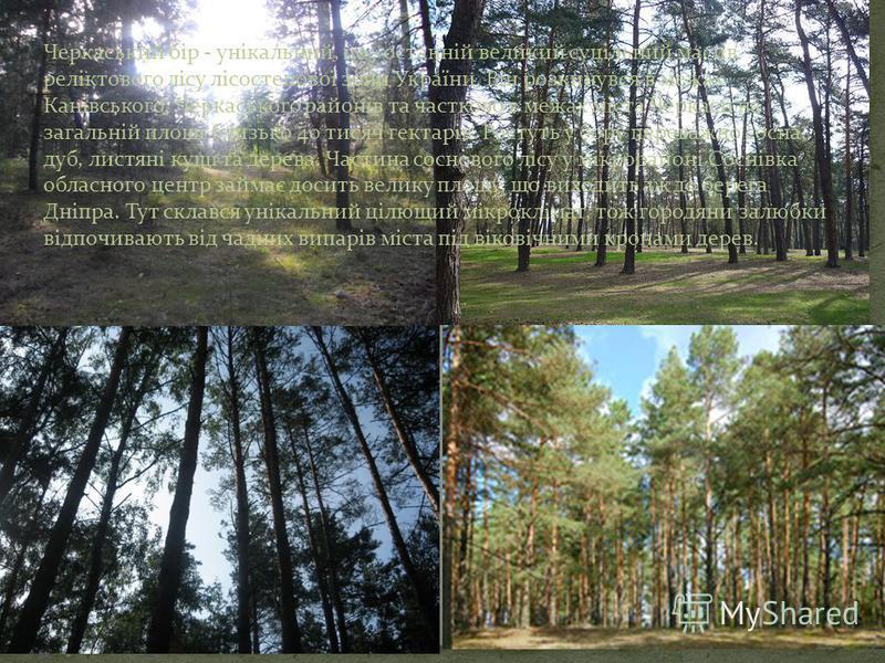 Черкаський бір - унікальний, це - останній великий суцільний масив реліктового лісу лісостепової зони України. Він розкинувся в межах Канівського, Черкаського районів та частково в межах міста Черкаси на загальній площі близько 40 тисяч гектарів. Рос