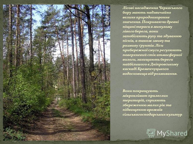 Лісові насадження Черкаського бору мають надзвичайно велике природоохоронне значення. Покриваючи древні піщані тераси в минулому лівого берега, вони запобігають руху та здуванню пісків, а також змиву та розмиву ґрунтів. Ліси прибережної смуги регулюю