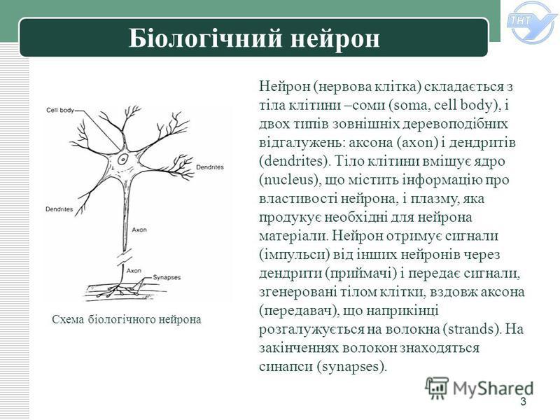 LOGO 3 Біологічний нейрон Нейрон (нервова клітка) складається з тіла клітини –соми (soma, cell body), і двох типів зовнішніх деревоподібних відгалужень: аксона (axon) і дендритів (dendrites). Тіло клітини вміщує ядро (nucleus), що містить інформацію