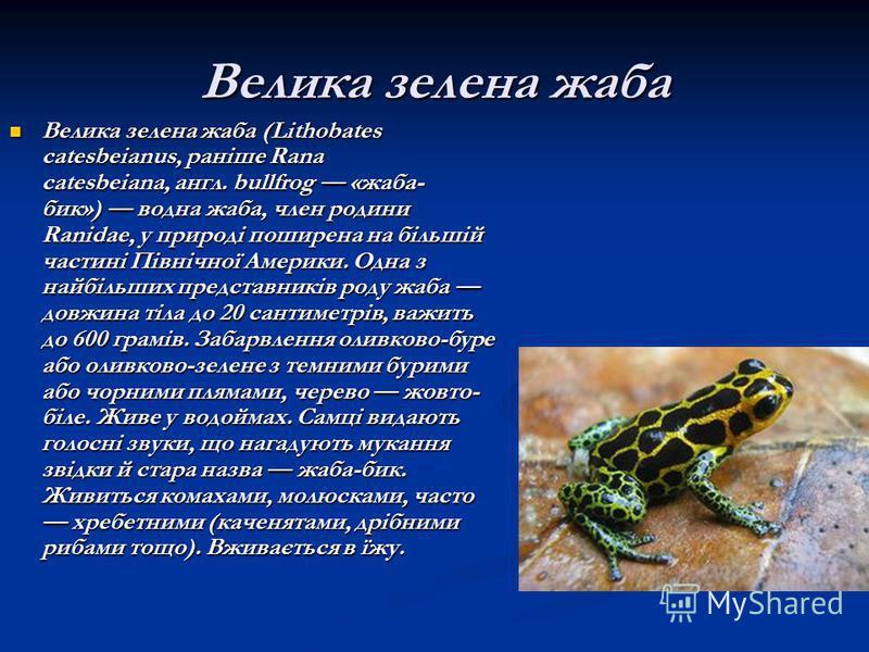 Велика зелена жаба Велика зелена жаба (Lithobates catesbeianus, раніше Rana catesbeiana, англ. bullfrog «жаба- бик») водна жаба, член родини Ranidae, у природі поширена на більшій частині Північної Америки. Одна з найбільших представників роду жаба д