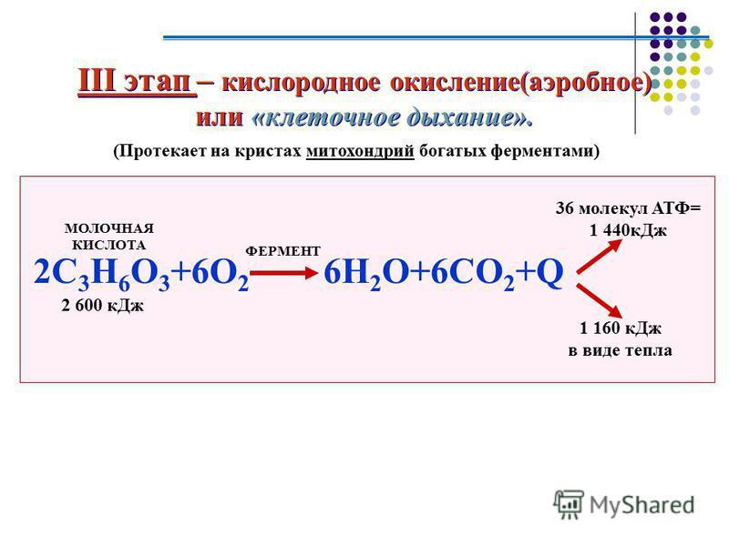 III этап – кислородное окисление(аэробное) или «клеточное дыхание». III этап – кислородное окисление(аэробное) или «клеточное дыхание». (Протекает на кристах митохондрий богатых ферментами) 2C 3 H 6 O 3 +6O 2 6H 2 O+6CO 2 +Q МОЛОЧНАЯ КИСЛОТА 2 600 к