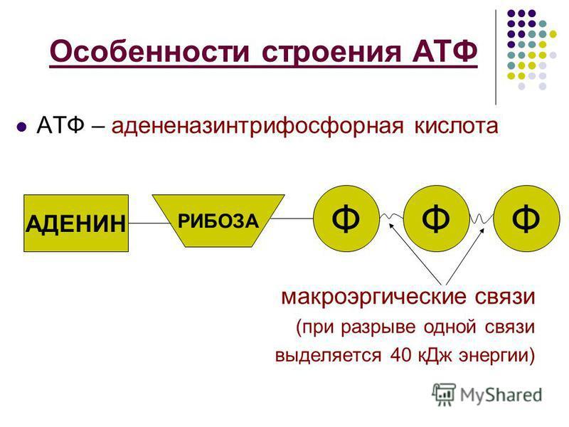Особенности строения АТФ АТФ – аденозинтрифосфорная кислота макроэргические связи (при разрыве одной связи выделяется 40 к Дж энергии) АДЕНИН РИБОЗА ФФФ