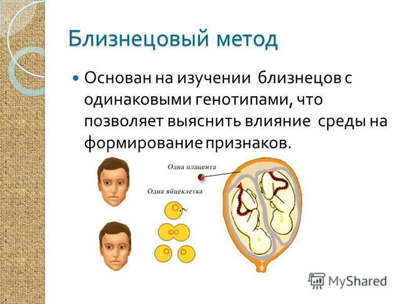 Близнецовый метод Основан на изучении близнецов с одинаковыми генотипами, что позволяет выяснить влияние среды на формирование признаков.