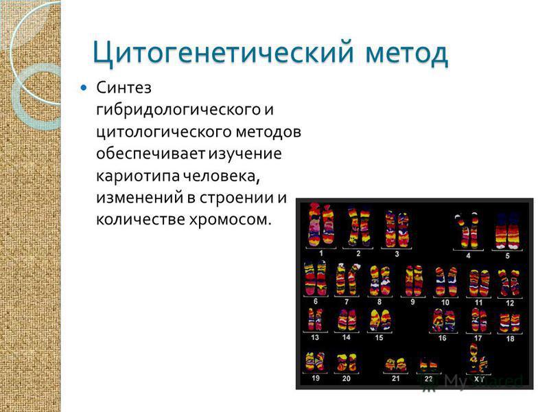 Цитогенетический метод Синтез гибридологического и цитологического методов обеспечивает изучение кариотипа человека, изменений в строении и количестве хромосом.