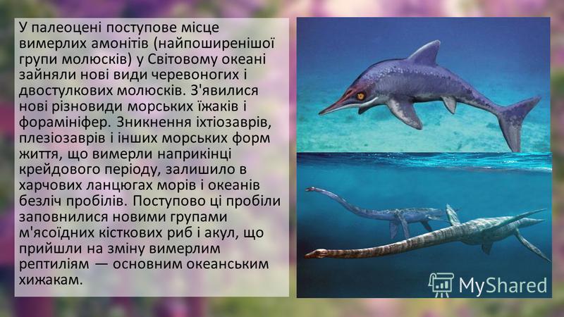 У палеоцені поступове місце вимерлих амонітів (найпоширенішої групи молюсків) у Світовому океані зайняли нові види черевоногих і двостулкових молюсків. З'явилися нові різновиди морських їжаків і форамініфер. Зникнення іхтіозаврів, плезіозаврів і інши