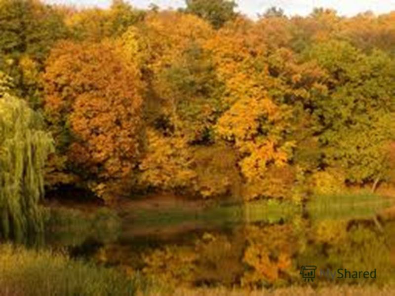 Де ростуть дерева? У якому лісі – хвойні? У якому - листяні?