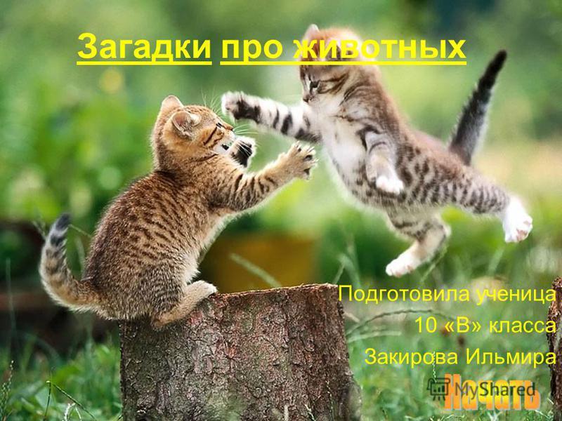 Загадки про животных Подготовила ученица 10 «В» класса Закирова Ильмира