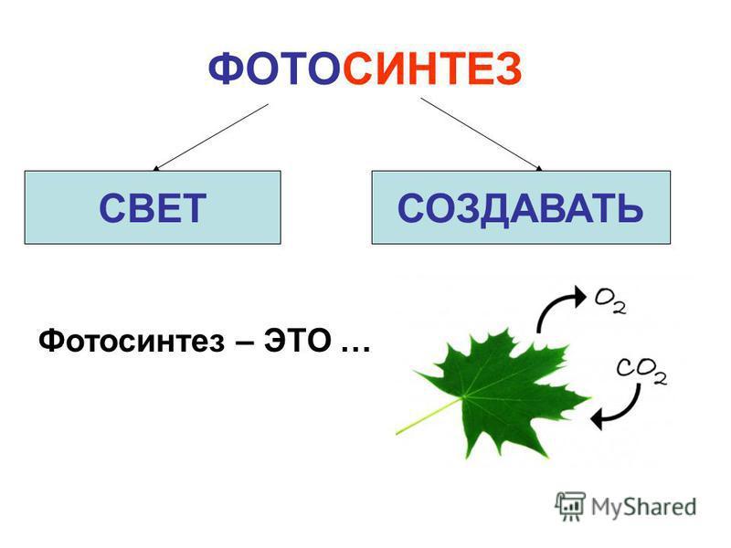 ФОТОСИНТЕЗ СВЕТСОЗДАВАТЬ Фотосинтез – ЭТО …