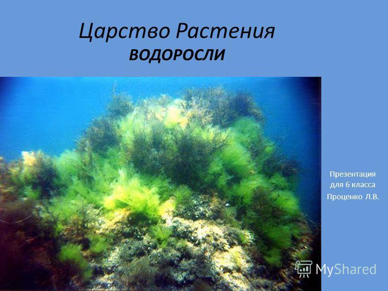 Царство Растения ВОДОРОСЛИ Презентация для 6 класса Проценко Л.В.