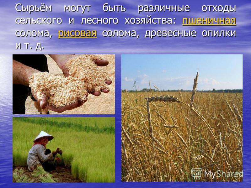 Сырьём могут быть различные отходы сельского и лесного хозяйства: пшеничная солома, рисовая солома, древесные опилки и т. д. пшеничнаярисоваяпшеничнаярисовая