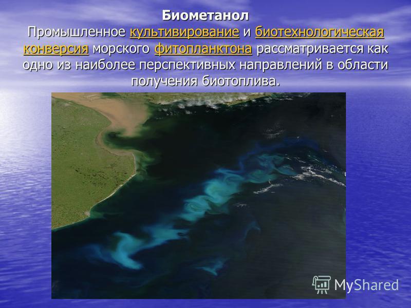 Биометанол Промышленное культивирование и биотехнологическая конверсия морского фитопланктона рассматривается как одно из наиболее перспективных направлений в области получения биотоплива. культивирование биотехнологическая конверсия фитопланктонакул