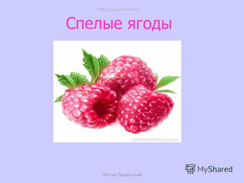 Снежная зима Мастер Презентаций http://www.deti-66.ru/