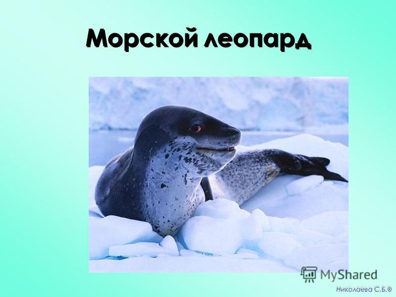 Морской леопард Николаева С.Б. ®