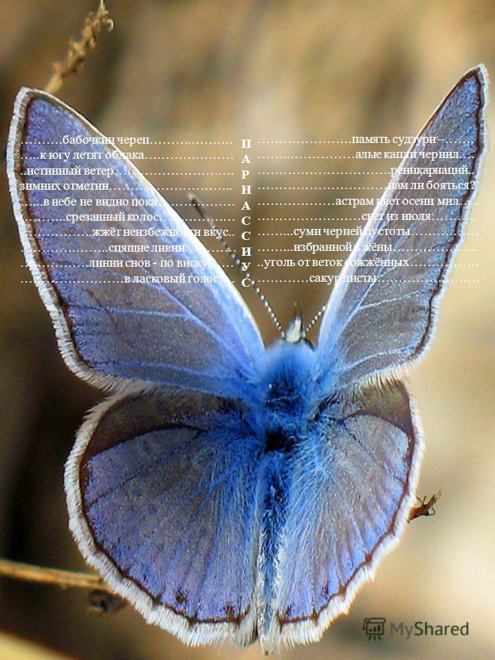 ……….бабочкин череп……….………. …..к югу летят облака…………………..истинный ветер………………………. зимних отметин……………………….. …...в небе не видно пока……………… ………..срезанный колос……………… ……………..жжёт неизбежности вкус.. ………….……..спящие ливни………… …………….линии снов - по виск