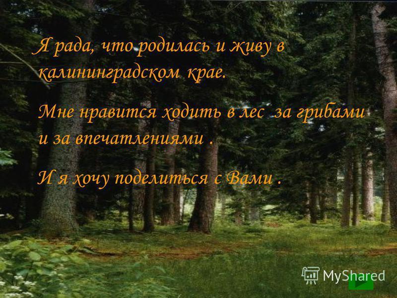 Я рада, что родилась и живу в калининградском крае. Мне нравится ходить в лес за грибами и за впечатлениями. И я хочу поделиться с Вами.