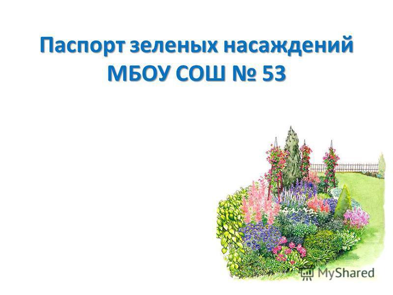 Паспорт зеленых насаждений МБОУ СОШ 53