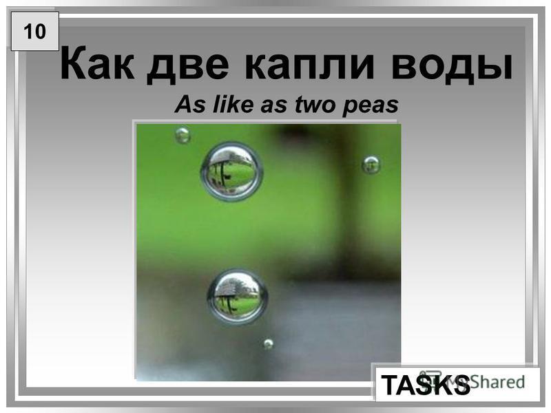 Как две капли воды As like as two peas TASKS 10
