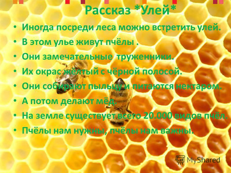Рассказ *Улей* Иногда посреди леса можно встретить улей. В этом улье живут пчёлы. Они замечательные труженики. Их окрас жёлтый с чёрной полосой. Они собирают пыльцу и питаются нектаром. А потом делают мёд. На земле существует всего 20.000 видов пчёл.