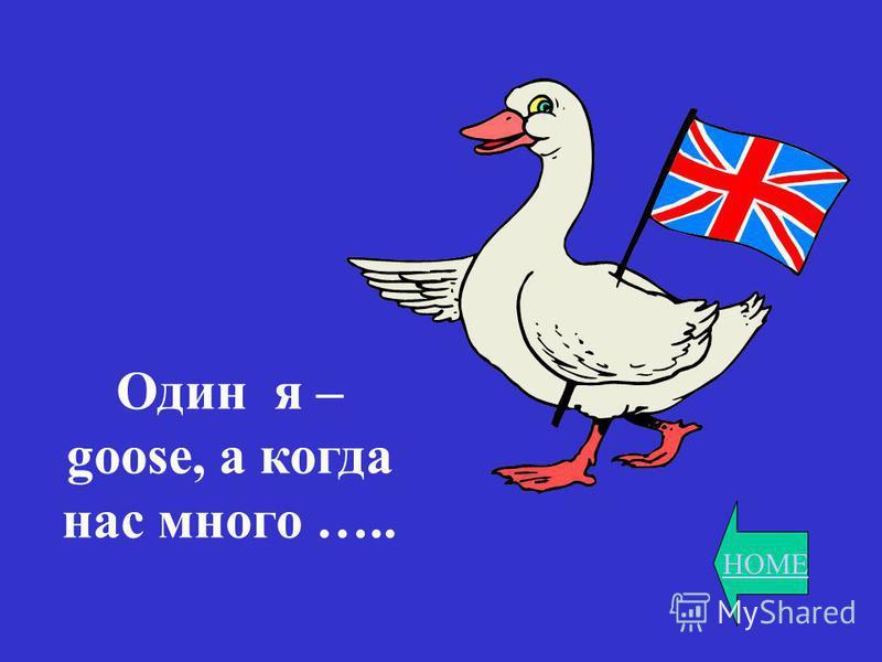 HOME Один я – goose, а когда нас много …..